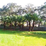 palm tree shaped near boundary wall in port elizabeth
