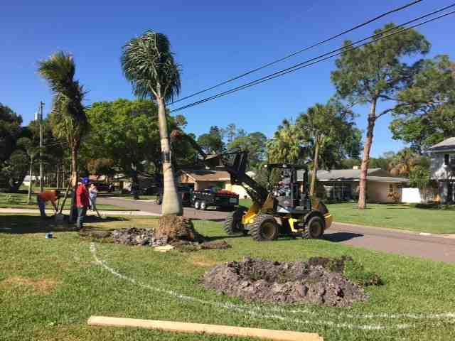 moving a palm tree with a tractor