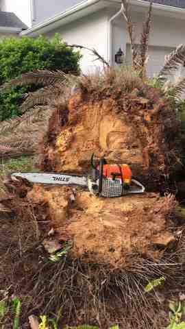 chainsaw lying next to a cut palm tree