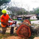 men cutting tree stump in port elizabth south africa with chainsaw