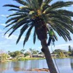 palm tree shaving in port elizabeth south africa